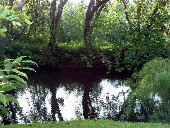 River Estate: Backyard