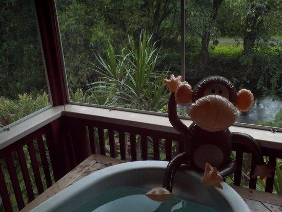 River Estate: Our monkey friend on the lanai