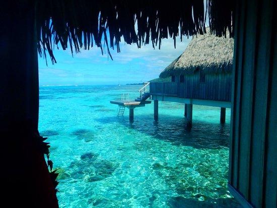 Sofitel Moorea Ia Ora Beach Resort: From our bungalow