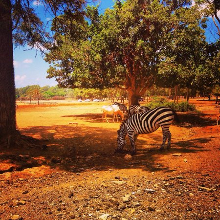 Safari Park: Safari