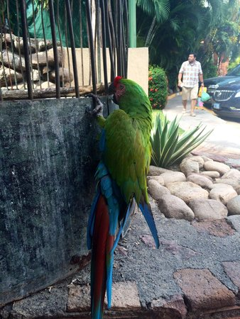 Las Palmas by the Sea: One of the parrots