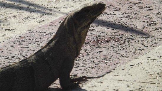 Luxury Bahia Principe Akumal Don Pablo Collection : Wildlife