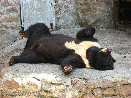 Nikolaev Zoo: Медведь