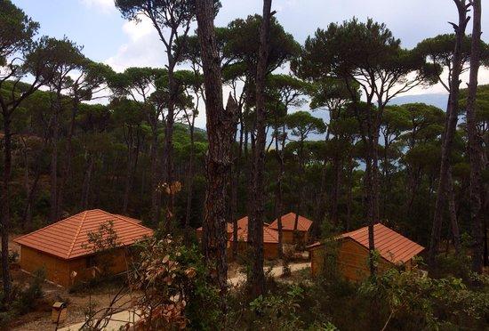 bungalows at quot la maison de la for 234 t quot picture of la maison de la foret jezzine tripadvisor