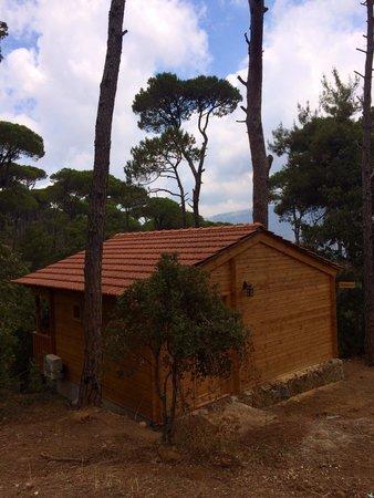 La Maison de la Foret: La Maison de la Forêt: Pommier