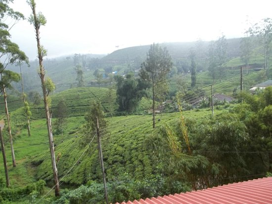 Tea Hills Bungalow : View from room toward tea hills