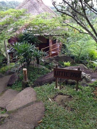 Bali Eco Stay Bungalows: Little Padi