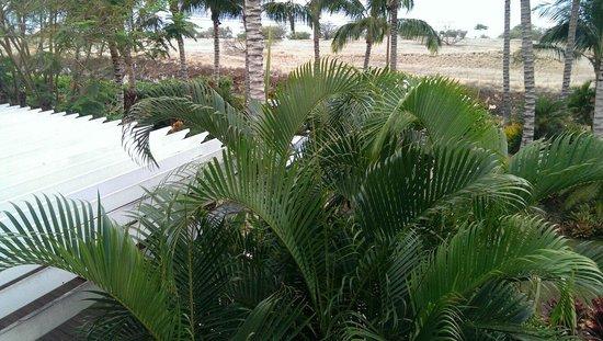 Pineapple Inn : View from lanai