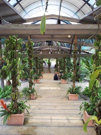 Hibiscus Garden: Corridor