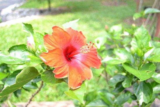 The Hibiscus Park: Hibiscus