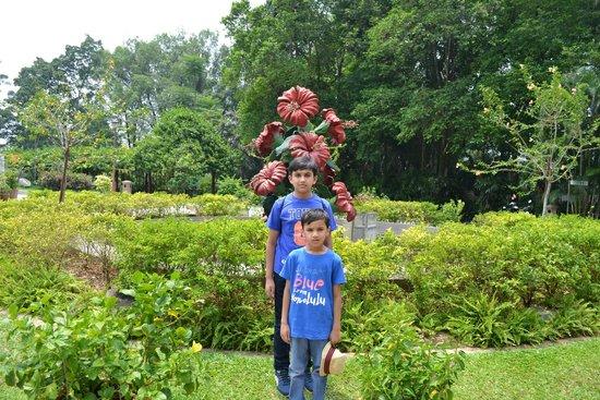 The Hibiscus Park: Hibiscus display