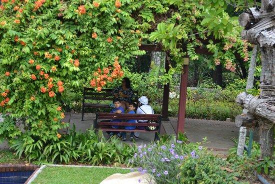 The Hibiscus Park: Garden