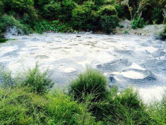 Te Puia: Mud pools