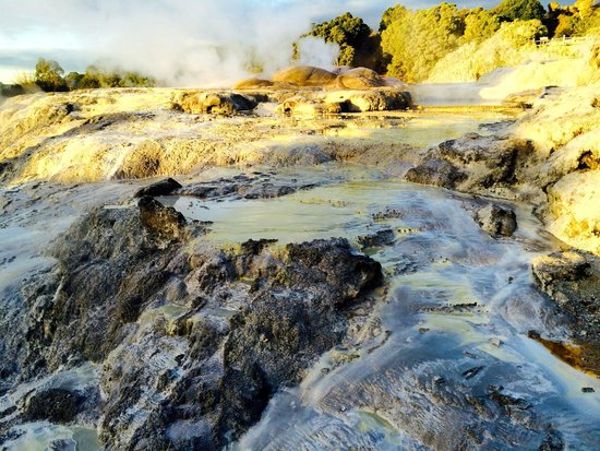 Te Puia : Hot water streams and geyser