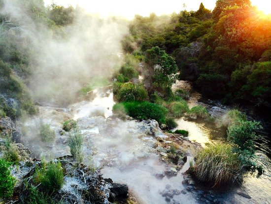 Te Puia: Warm water stream