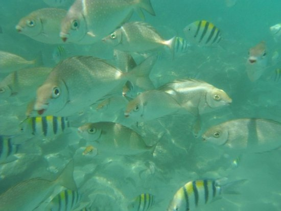 Kata Beach: Snorkling