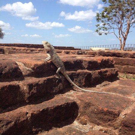 Sigiriya World Heritage Site: Lizard basking in the sun on the ruins