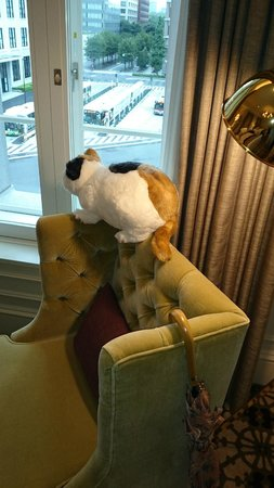 The Tokyo Station Hotel: my doll cat looking outside from room
