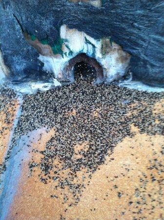 Apartamentos Poblado Marinero: Houtworm/termieten?