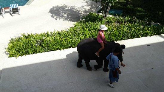 Outrigger Laguna Phuket Beach Resort : Baby elephant at Outrigger
