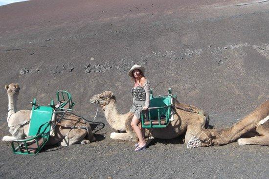 Parque Nacional de Timanfaya: Cammelli 'parcheggiati' attendono i turisti...
