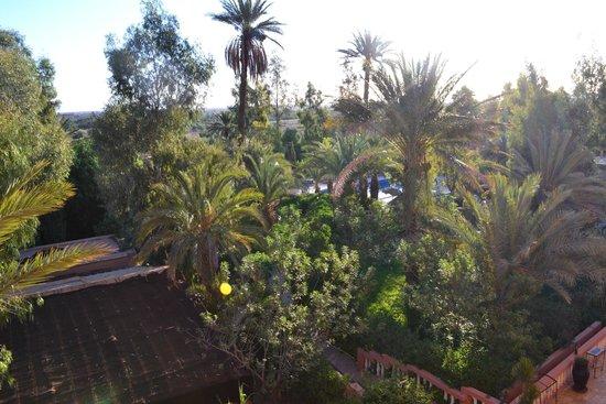 Les Jardins de Ouarzazate: Giardino