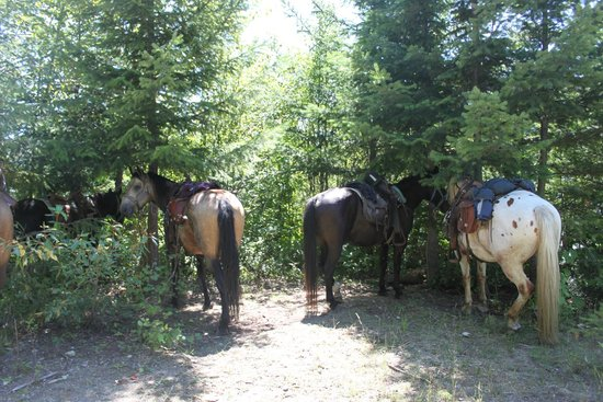 Copper Cayuse Outfitters: The horses got the chance to rest after a great job climbing the mountain!