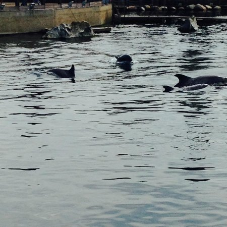 Dolfinarium : Dolfijnen Delta