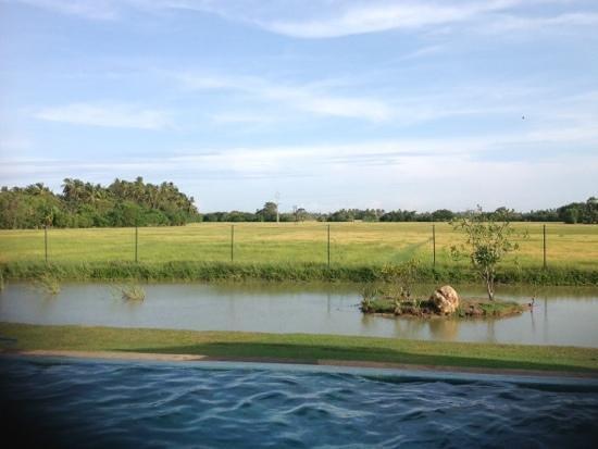 Kithala Resort: pool, pond and paddy facing view!