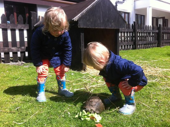 Glendeer Pet Farm: Twins and the tortoise.