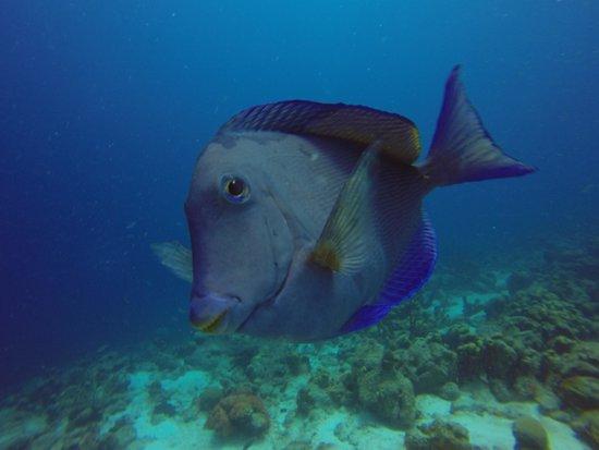 Divi Dive Bonaire: Calabas Reef