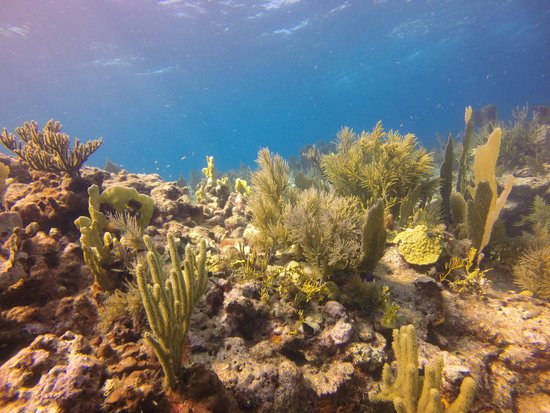 John Pennekamp Coral Reef State Park : Molasses Reef