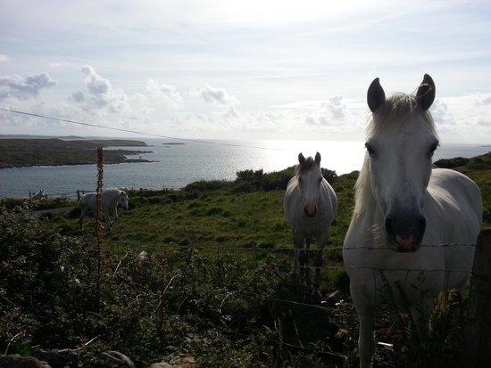 Clifden Bay Lodge: Des chevaux à coté de la maison