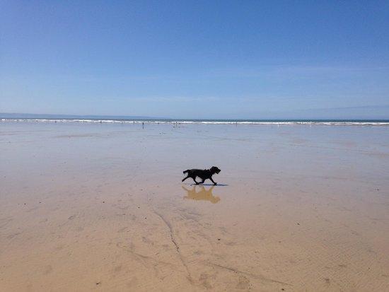 Saunton Sands Beach : Beau's holiday