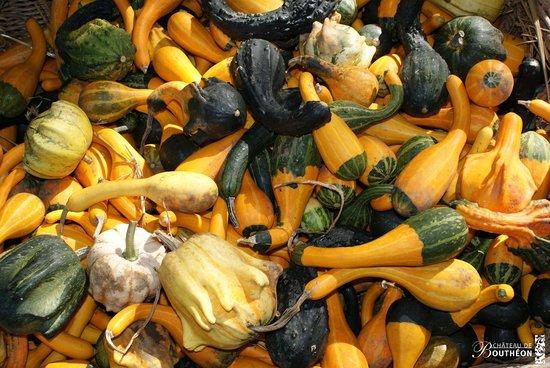 Andrezieux-Boutheon, Frankreich: La Fête de la Courge et des saveurs d'automne en octobre