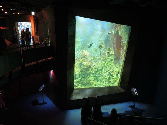 Klimahaus: Grosse Aquarien mit der bunten und schönen Meeres-Vielfalt
