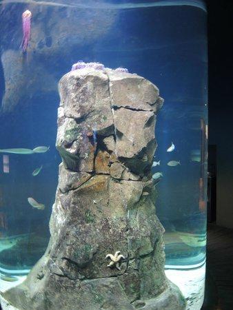 Klimahaus Bremerhaven 8° Ost: Interessante Meeres-Lebewesen an einem Stein im Aquarium
