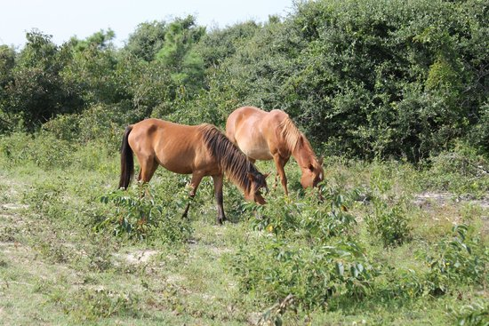 Wild Horse Adventure Tours: 2 of the many we saw