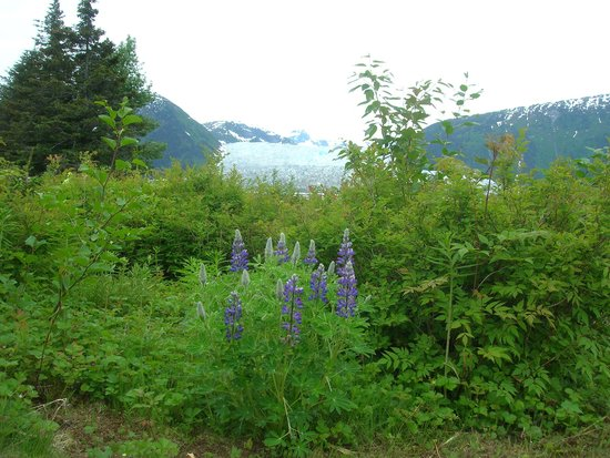 Taku Glacier Lodge & Wings Airways: Nature walk, glacier in background!