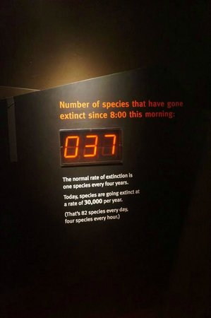 The Field Museum: How Shocking and Sad !