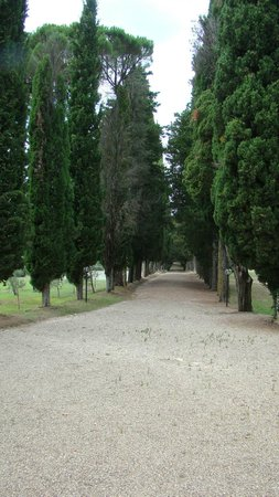 Hotel Villa San Donnino: Cedar lined road to chapel at the hotel