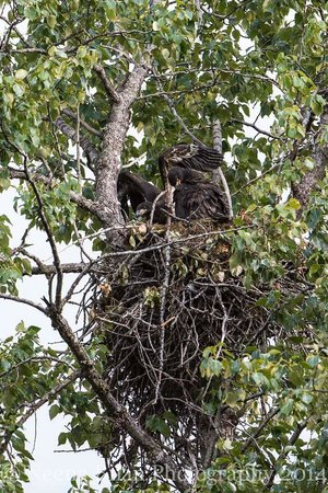 Bear Lake Lodgings B&B: Eagle Nesting