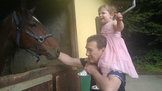 Ashford Equestrian Centre : My daughter loving the horses