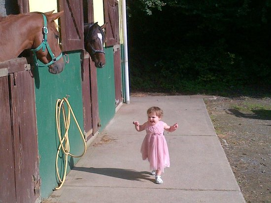 Ashford Equestrian Centre: The horses keeping an eye on my daughter