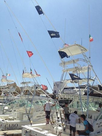 Marina Cabo San Lucas: 4 Fish and 4 released
