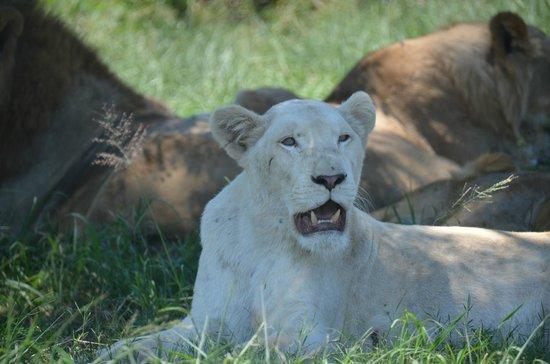 Zulu Safaris: Tour 1