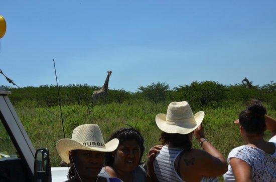 Zulu Safaris: Hluhluwe