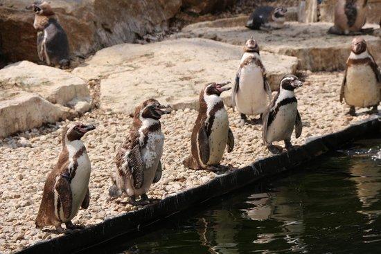 Parc Animalier et Botanique de Branféré : Parc animalier de Branféré