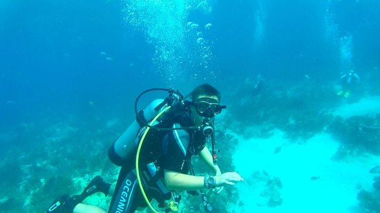 Amoray Dive Resort : Diving trip