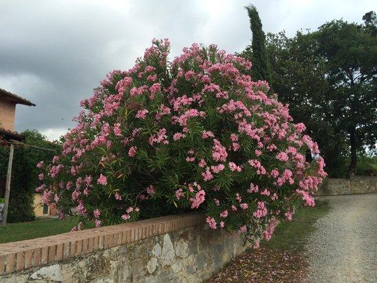 Fattoria di Corsignano: Plants across the area